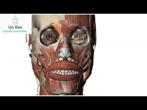 Mejores 30 imágenes de apuntes anatomia en Pinterest | Apuntes ...