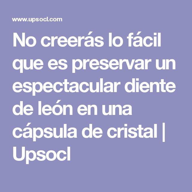 No creerás lo fácil que es preservar un espectacular diente de león en una cápsula de cristal | Upsocl