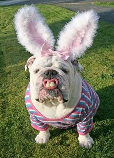 "I wouldn't want to collect the ""eggs"" this Easter Bunny lays, lol"