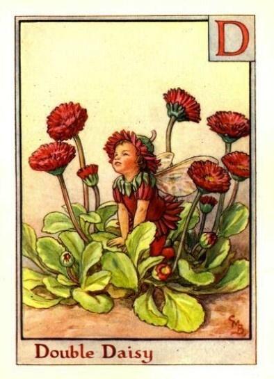 Double Daisy Flower Fairy, Fairies Print by Cicely Barker » Flower Fairy Prints - See all 168 Cicely Mary Barker Flower Fairies for Sale.