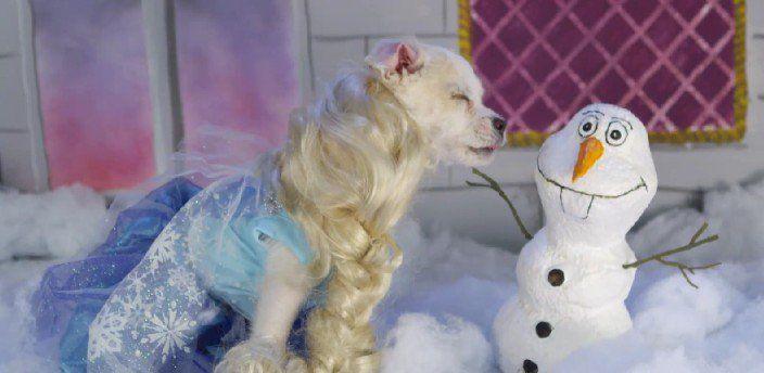 Estos pequeños cachorros son disfrazados de los principales personajes Disney creando escenas realmente adorables.