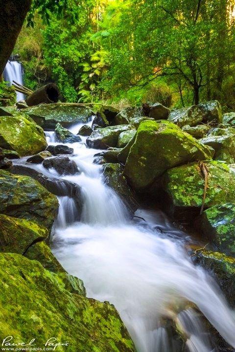 Curtis Falls - Mt Tamborine - Australia - photo Pawel Papis