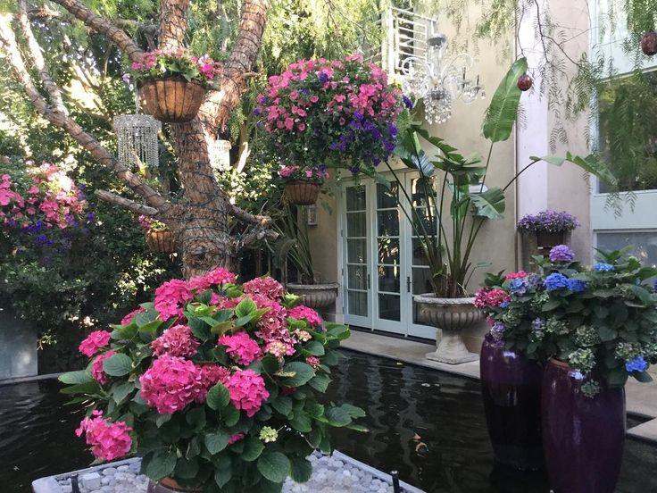 Beautiful hanging baskets at villa Rosa this morning... Good morning