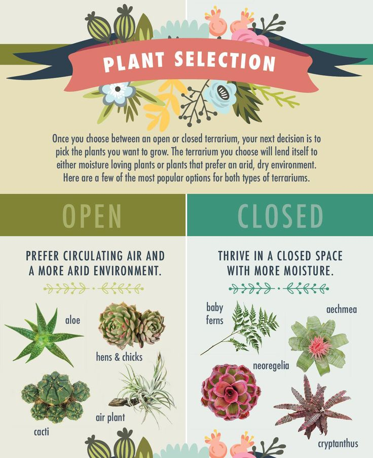 The best plants for open vs closed terrariums - Click for more terrarium tips.