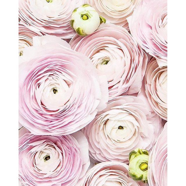 Journée de m**** temps de m**** moral en berne... Les fleurs ça fait toujours du bien non?