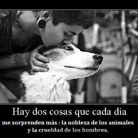 Hay dos cosas que cada dìa me sorprenden màs: la nobleza de los animales y la crueldad de los hombres: