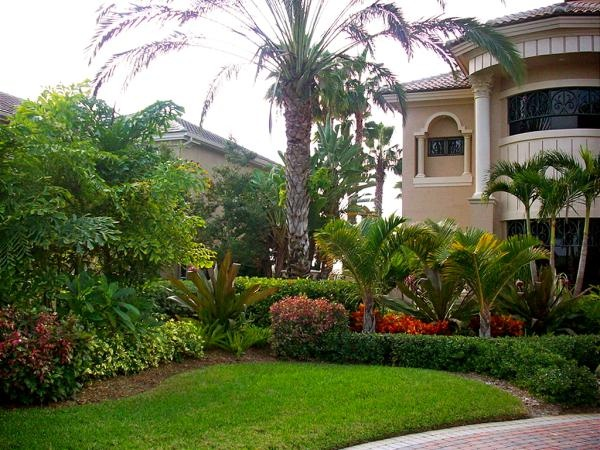 Best 25 Palm Trees Landscaping Ideas On Pinterest