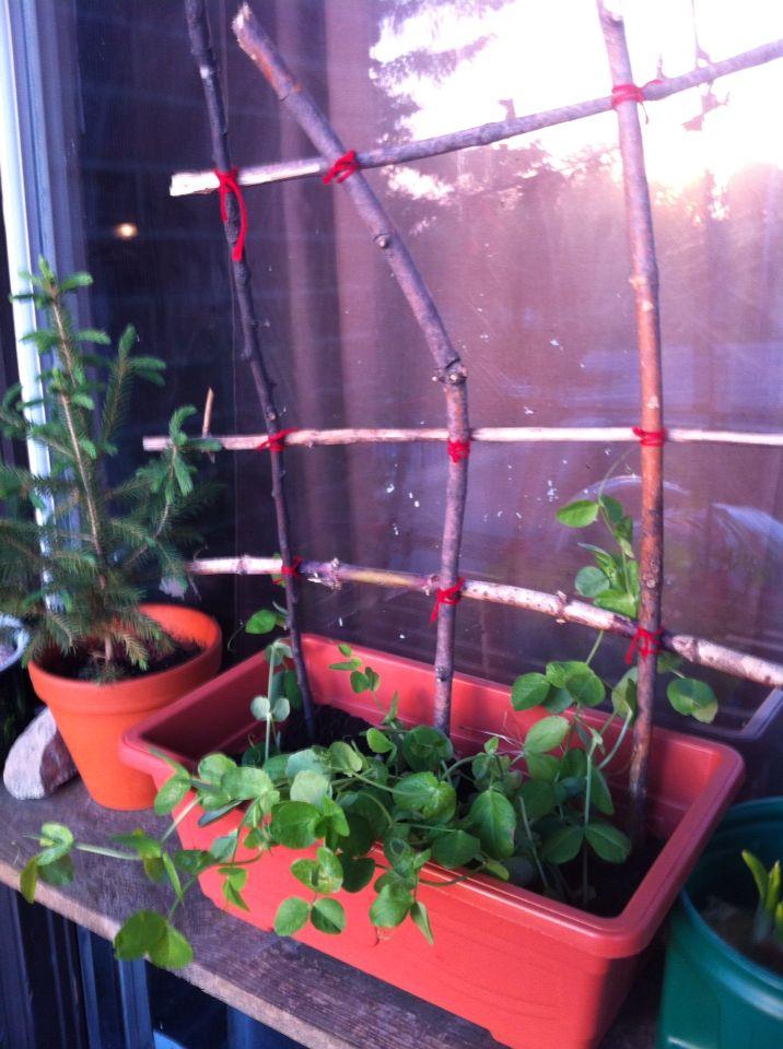 DIY mini plant fence