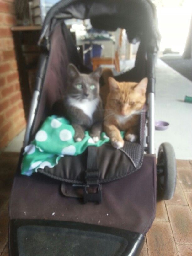 The pram was for Holly for walking now she is elderly.  The cats have hijacked it