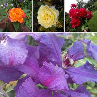 Клематис и роза идеальная пара