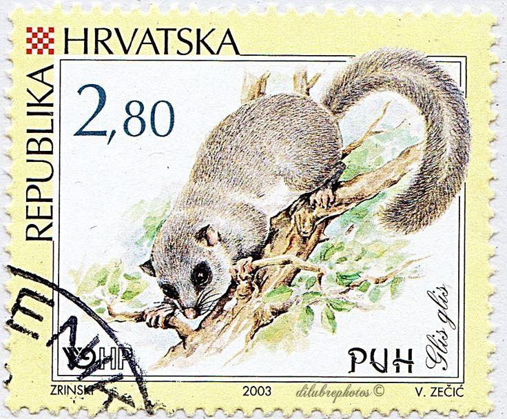 Croatia. RODENTS. GLIS GLIS. Scott 530 A297, Issued 2003