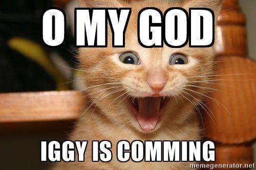 Gelukkig katten - o mijn god Iggy is comming