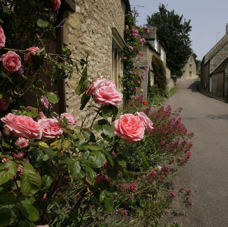 Английские дома и розы: alionushka1