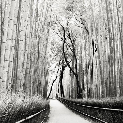 Giant Bamboo - Japan, Josef Hoflehner