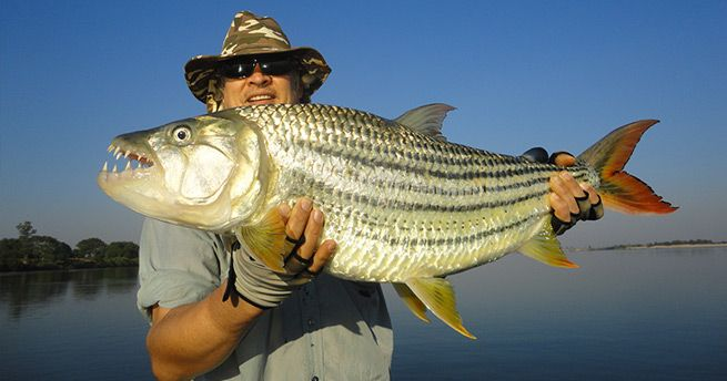 Fish with our expert fishing guides on a multi-day fishing tour on Zambezi River!