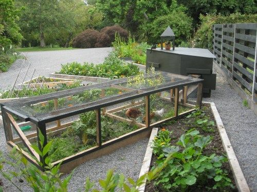 Love this permaculture chicken rotation. Sunburst design. Beds can be planted to nourish birds or for veg production