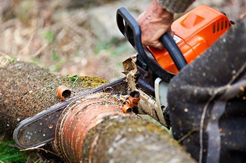 Tree services Atlanta, Georgia. Tree removal, cutting, trimming, pruning, Landscaping. Emergency tree service Atlanta. Emergency Arborist Atlanta