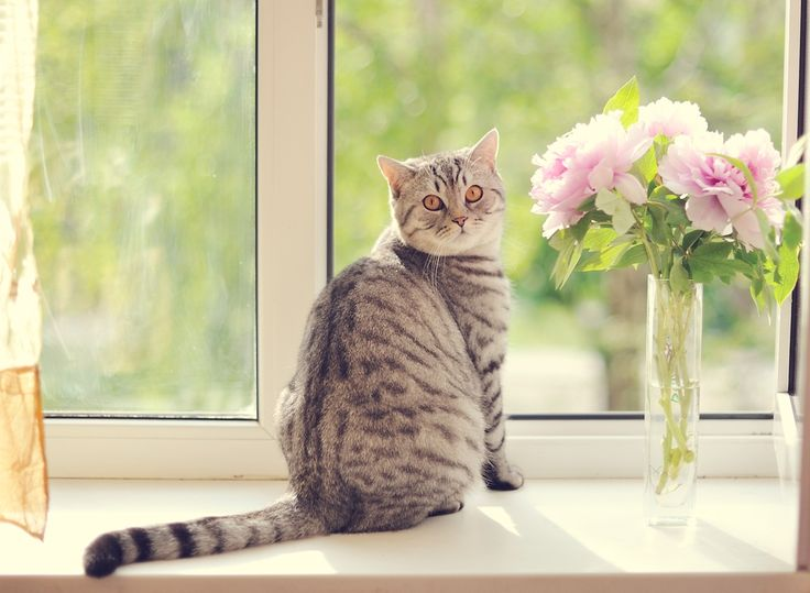 1000 images about cat friendly plants on pinterest cats garden ideas and for dogs. Black Bedroom Furniture Sets. Home Design Ideas