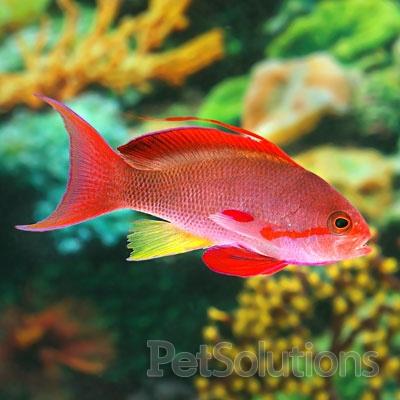 56 best salt water aquarium images on pinterest for Reef fish for sale