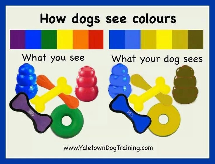 dog vision spectrum