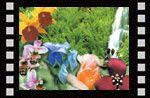 Bitkilerin dünyası (Çocuk filmi 10) Video