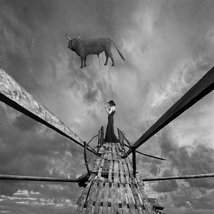 surrealista manipulación de la foto de digital negro toro blanco