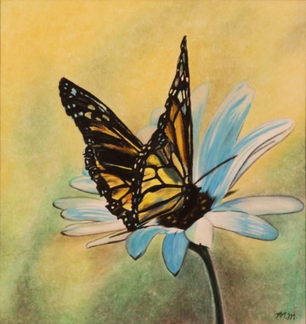 Butterfly Drawings | Butterfly On Flower Drawing by Michelle Miron - Butterfly On Flower ...