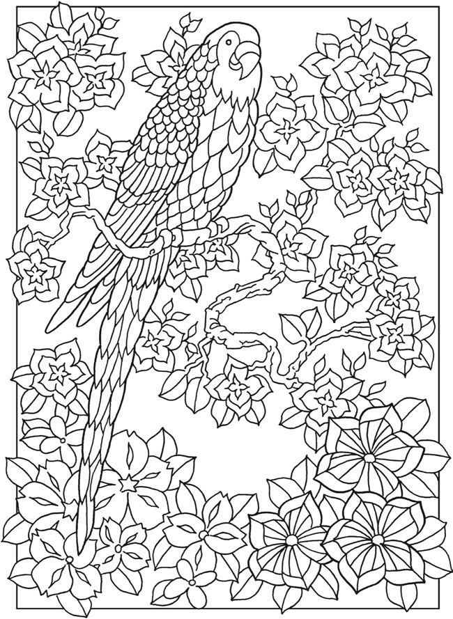 Creative Haven Paradise Designs Coloring Book Dover Publications