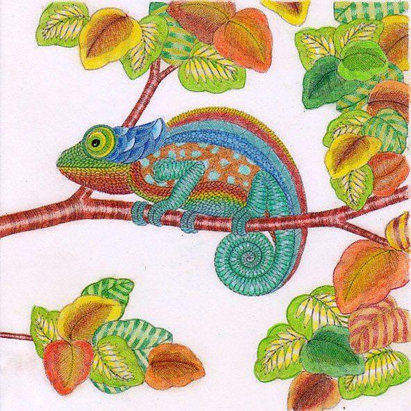 Adult Coloring Books Chameleons Animal Kingdom