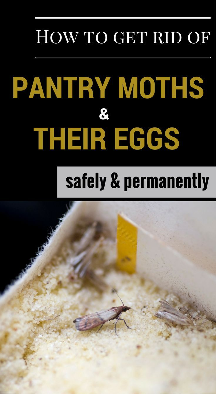 How To Get Rid Of Pantry Moths And Their Eggs Safely And Permanently Pantry Moths Cleaning Hacks Deep Cleaning Tips