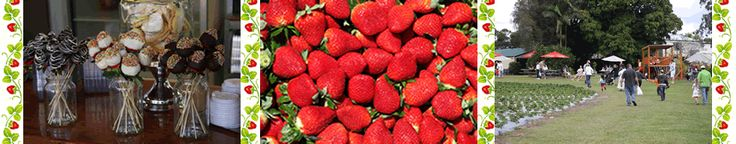 Strawberry Picking - Pick your own strawberries at the sunshine coast Strawberry Fields farm.  May to October.  A great day out for all ages, enjoy picking your own strawberries then take them home to make it into simple & delicious homemade jam!  See my recipes page for my favourite recipe. :)