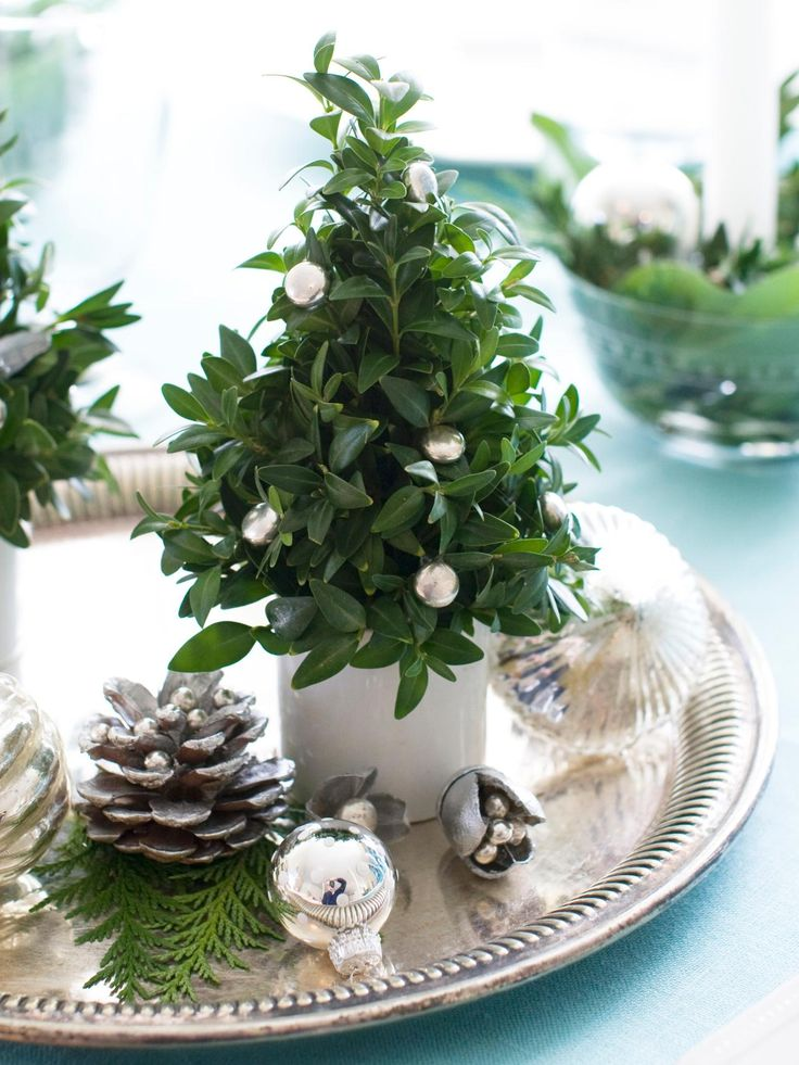 Bring holiday cheer to any room in the house by turning boxwood clippings into a miniature Christmas tree. Fill a white teacup with oasis foam and arrange your boxwood clippings to form a tiny tree. For added sparkle, attach silver dragees with a hot glue gun. This simple accent is perfect for a holiday table. an entryway vignette or as a festive small-space accessory. Design by Matthew Mead