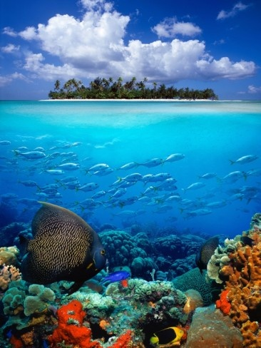 Underwater Scene in the Tropics - ©Gray Hardel (via AllPosters)
