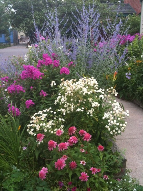36 best images about landscaping curbside on pinterest for Less maintenance plants