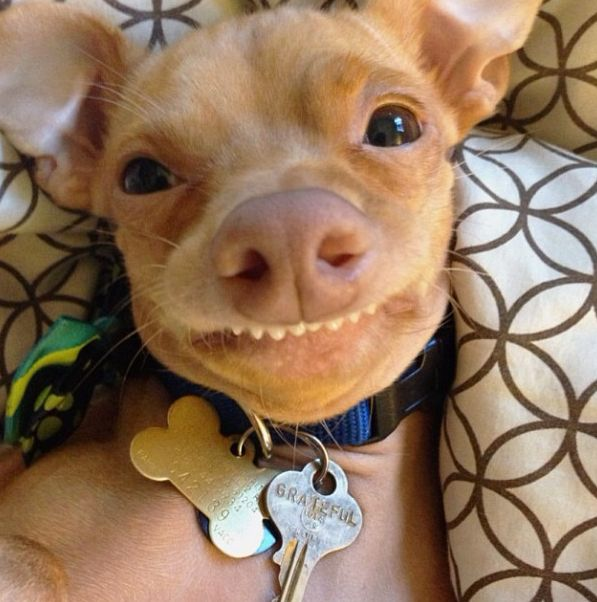 You Re Amazing Dog: 78 Best Phteven Images On Pinterest