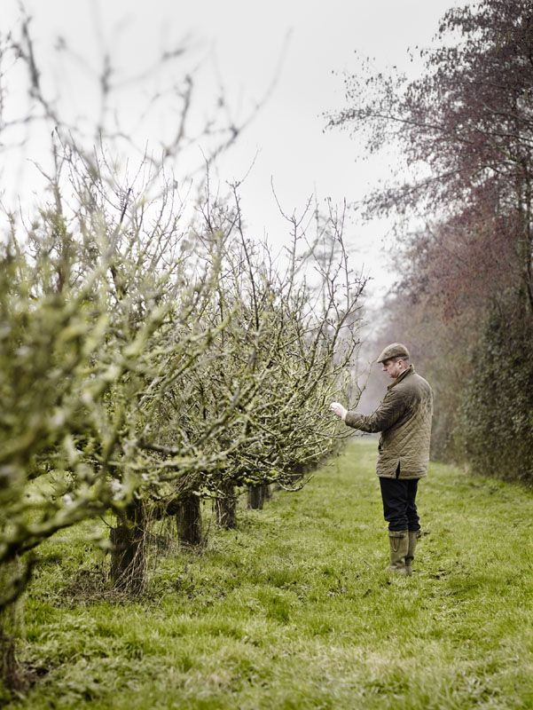 Cyder vinegar orchardFarms Marketing Countryside, Country Living, Fruit Trees, Apples, Food Photography, Andrew Montgomery, Country Life, Cowboy Hats, Christmas Trees