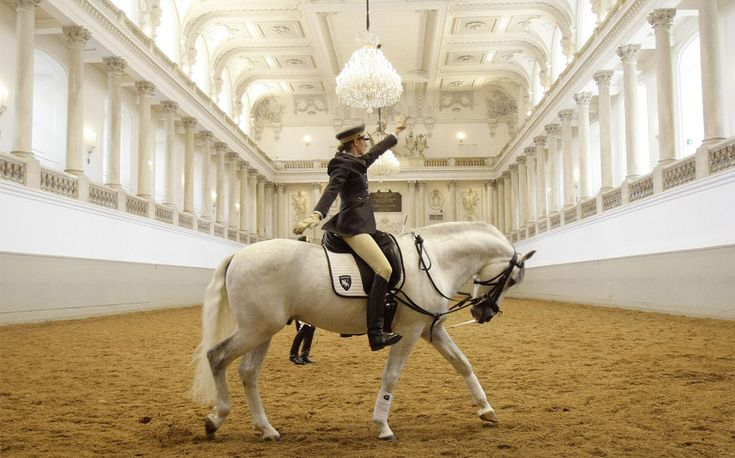 The Spanish Riding School in Vienna.
