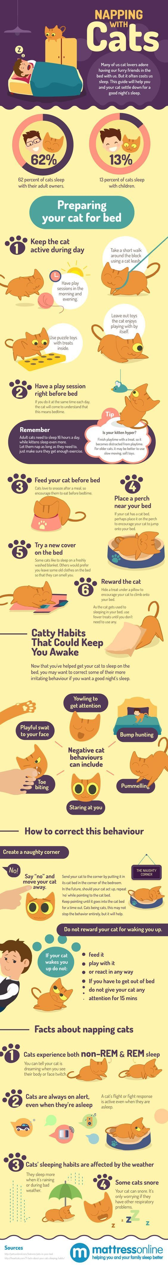 If you are one of the pet owners, you should know by now, that anything and everything that you do is going to be interrupted and interfered in by your pet. Something as simple as sleeping can become a challenging task when your pet is around. Here is a guide to successfully taking a nap with your cats: Infographic by – Mattress Online * You can get additional details at the image link. #LovelyCats