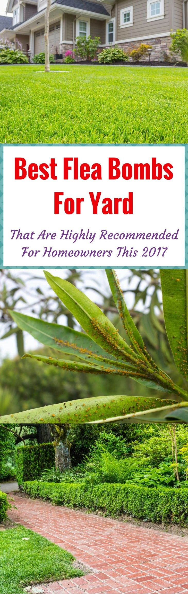 Best 25 flea bomb ideas on pinterest getting rid of fleas in your yard is not easy learn how to get rid of fleas efficiently and the best flea bomb for yard we recommend in this article ccuart Images