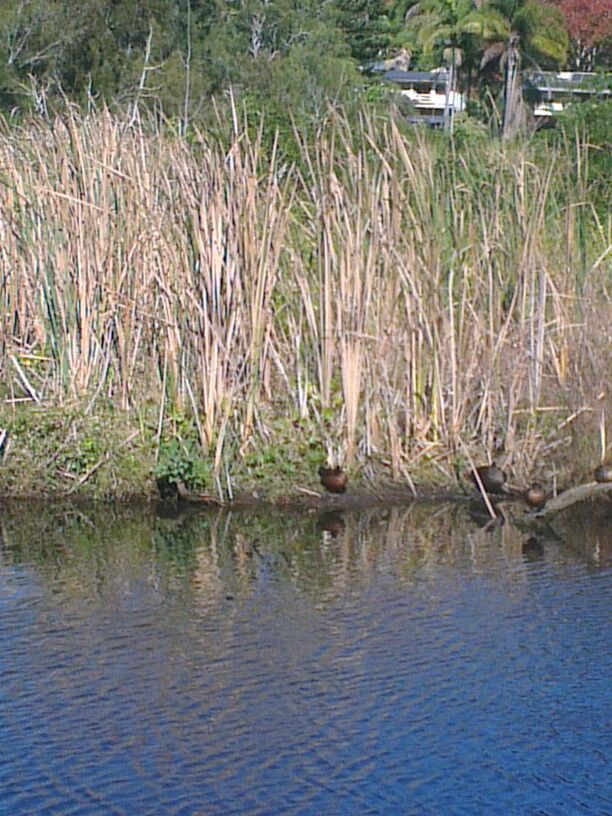 Ducks snoozing on mothers day