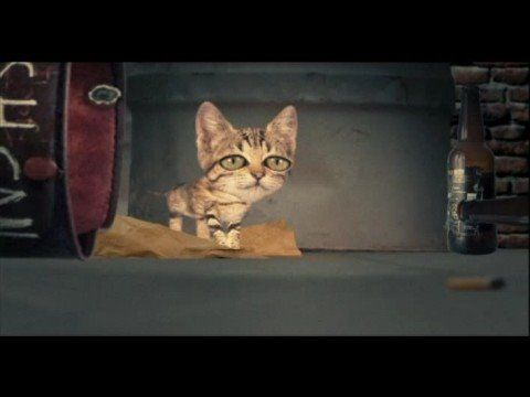 "MOBY - Dream About Me (official video). Love hearing Andrina requesting the ""kitty"" song :)"