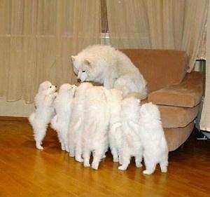 海外の犬好きグループに投稿された写真が「感動する!」「かわいい!」と話題沸騰 - NAVER まとめ - via http://bit.ly/epinner