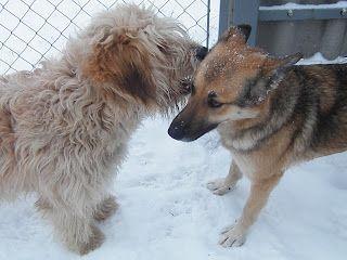 Állatfotók állatainkról, gyerekeknek, felnőtteknek!: Jó barátok lettek.
