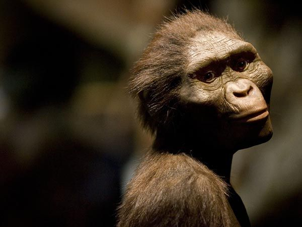 """""""Lucy's Baby"""" a Born Climber, Hinting Human Ancestors Lingered in Trees  Australopithecus afarensis' shoulders pointed upward, new fossil study suggests."""