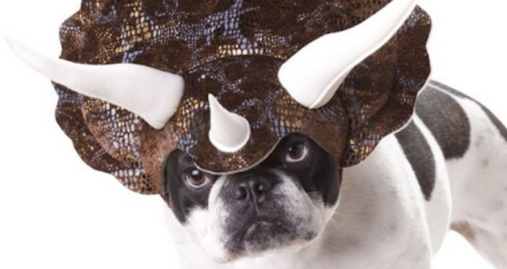9 Black Friday Gifts That Prove You Really Love You Dog via www.bored.com