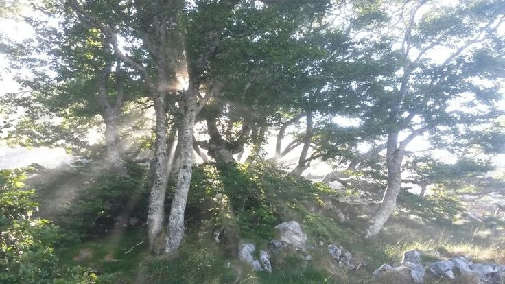 Backlight tree in the Aizkorri Natural Park. Basque Country