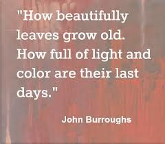 """How beautifully leaves grow old. How full of light and color are their last days. "" John Burroughs"