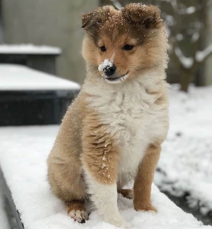 These 20 Pictures Of Dogs And Cats Playing With Snow For The First Time Will Make Your Day Dog Cat Dog Pictures Cat Playing