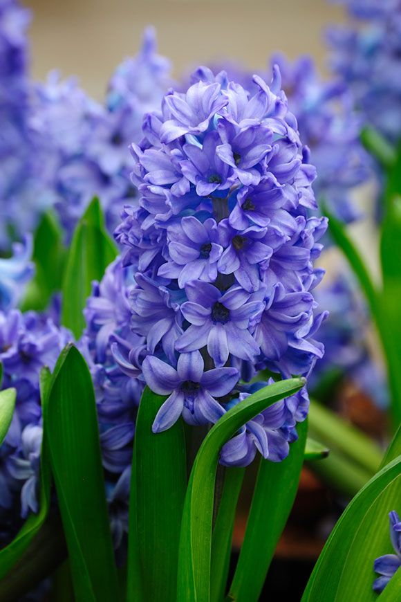 15 Perennials That Grow In Zone 5 Garden Lovers Club Long Blooming Perennials Flowering Bushes Container Gardening Flowers