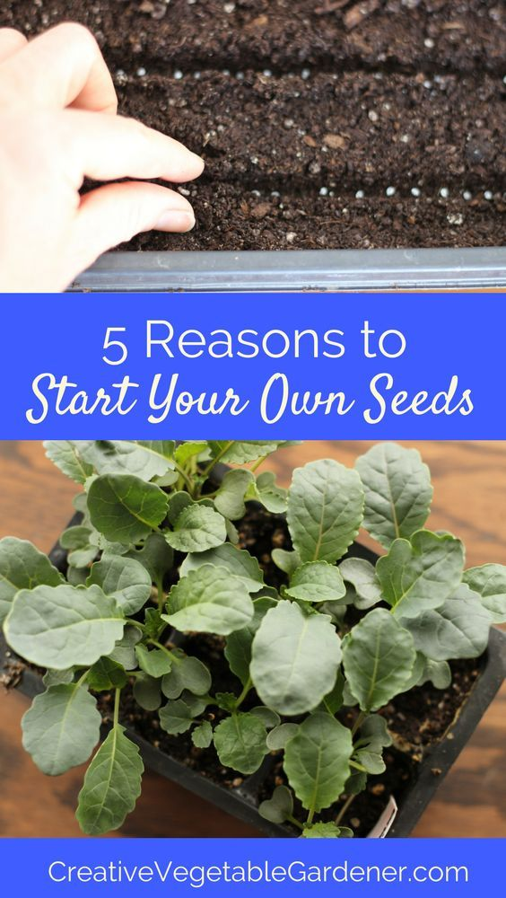 If you've never started seeds before, this is your year, and here's why!